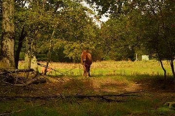 Ein Pferd im Wald von Gerard de Zwaan