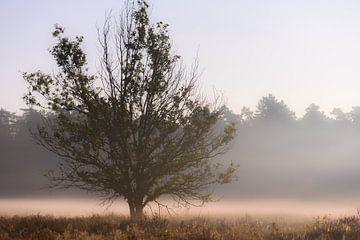 boom in de nevel van Tania Perneel