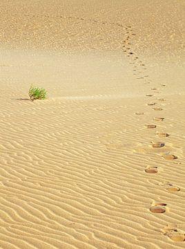 Fußspuren im Sand von BVpix