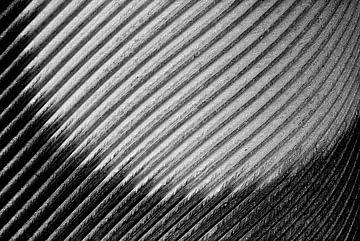 Vogelfeder von Elbert-Jan Achterberg