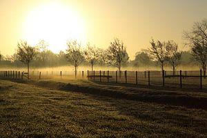 Gouden mist van Michel Vedder Photography