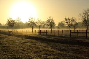 Gouden mist van