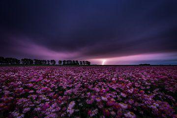 Onweersbui boven veld bloemen van Coen Janse