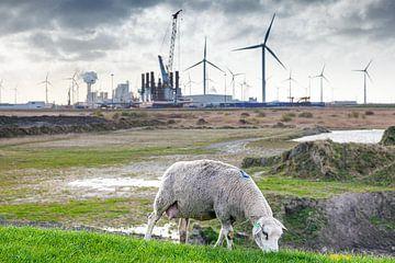 """Un pâturage des moutons le long de la digue près de la «Vallée de l'énergie"""" à Groningen, Pays- sur Evert Jan Luchies"""