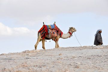 Kameel in de woestijn van Henk de Fotograaf