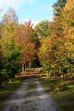 Une avenue au-dessus d'un domaine à l'automne sur Gerard de Zwaan