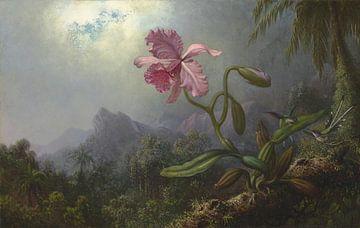 Twee kolibries met een orchidee, Martin Johnson Heade... van
