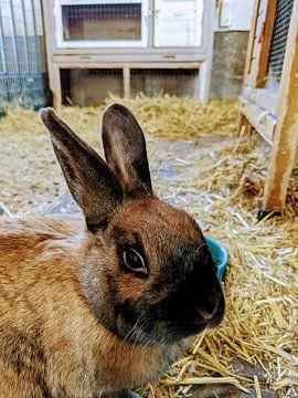 Je konijn, maar dan in je kamer van Jacco Aalbers