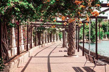 Park in Torrevieja von Shelena van de Voorde