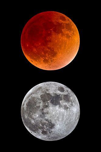 éclipse lunaire totale et pleine lune sur Monarch C.