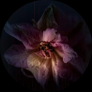 Kracht van een bloem van bart dirksen