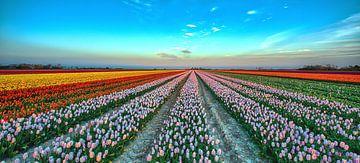 Dutch Tulips von Reint van Wijk