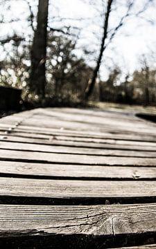 The bridge van Ilse Hofman
