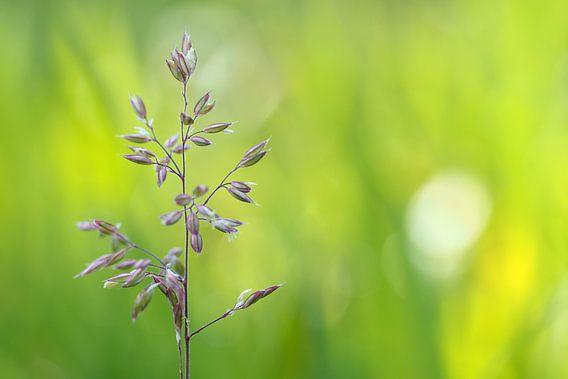 Wilde paars/witte bloem