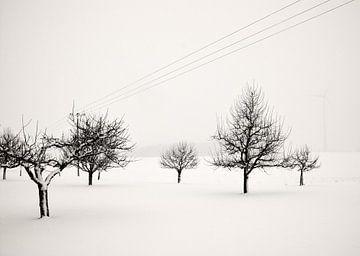 Obstwiese im Winterschlaf I von Lena Weisbek