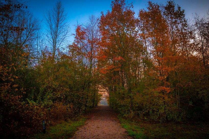 Tor zur Sonne von Peter Heins
