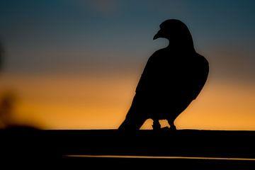 Duif tegen ondergaande zon #3 van Johan Dingemanse