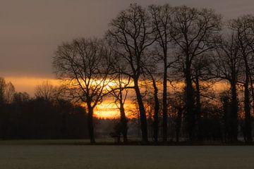 opkomende zon tussen de bomen van Tania Perneel