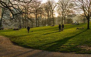 Zomeravond in Sonsbeek park