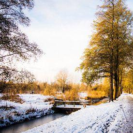 Westerpark in de sneeuw || Stadsnatuur in Amsterdam, winter van Suzanne Spijkers