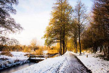 Westerpark in de sneeuw || Stadsnatuur in Amsterdam, winter