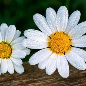 Bloemen met waterdruppels van Marga Vroom