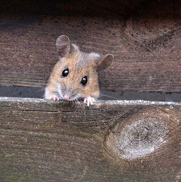 .. hier kommt die Maus .. van Wiltrud Schwantz