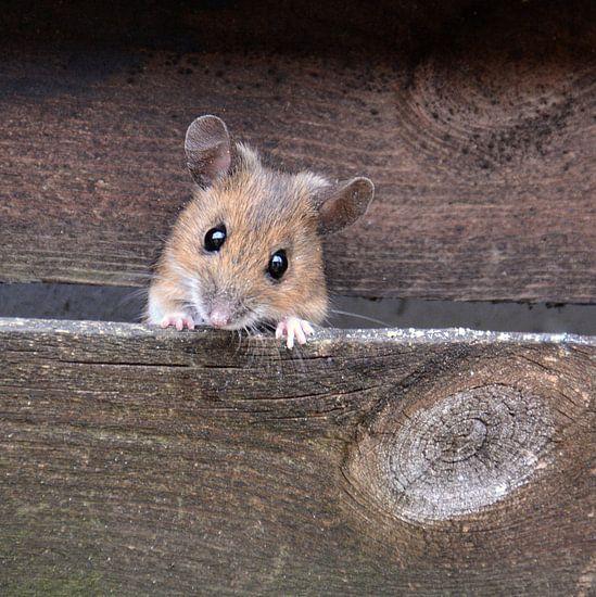 .. hier kommt die Maus ..