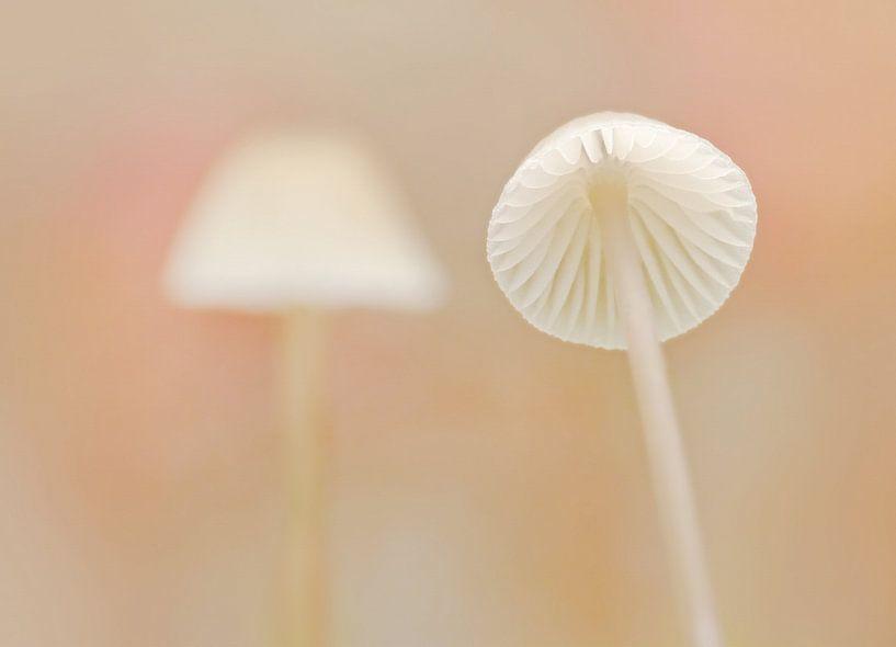Flirtation (Twee witte paddenstoeltjes) van Caroline Lichthart