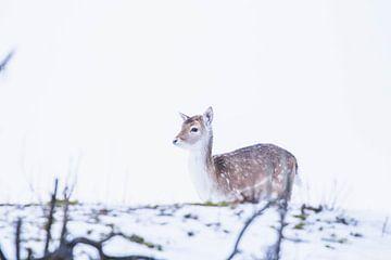 Rennend damhert in de sneeuw van Anne Zwagers