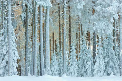 Besneeuwd winter landschap