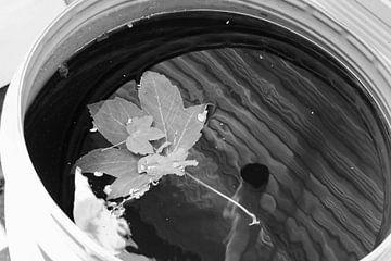 Blad in het water van Sidney de Graaf