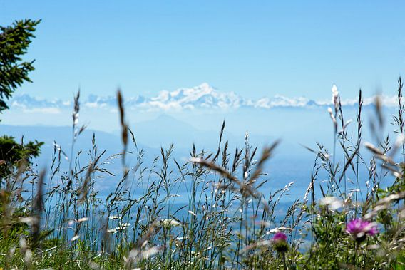 De Mont Blanc van Gijs de Kruijf
