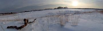 Panorama Besneeuwde Duinen van