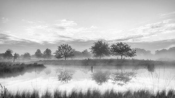 Bomen in ochtendnevel, zwart wit