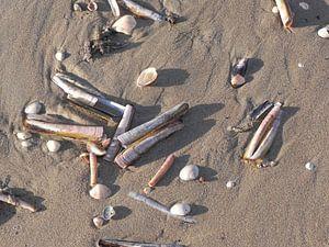 Schelpen op het strand van Scheveningen van