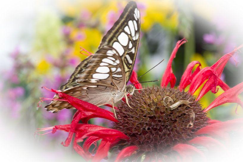 Vlinderkasvlinder2 van Sybren Visser