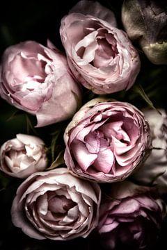 roses sur