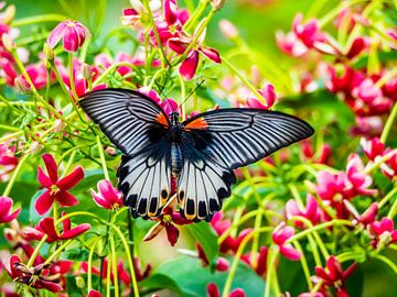 Grote vlinder van Stijn Cleynhens