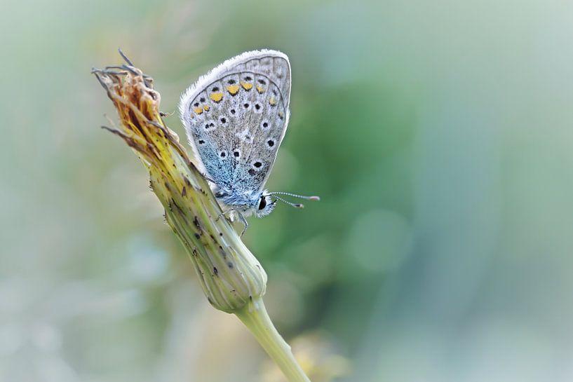 Free your mind ....... (Blue version) (vlinder, Zomer, natuur) van Bob Daalder