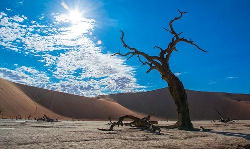 Skelett von einem Baum in Deadvlei, Namibia