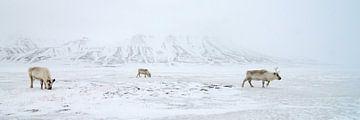 Rendieren voor besneeuwde bergen von LTD photo