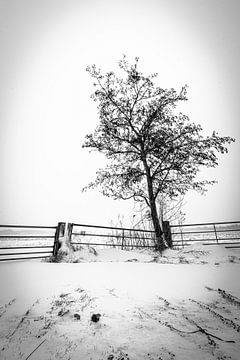 Ingang van weiland in de Sneeuw van thomas van der Wijngaard