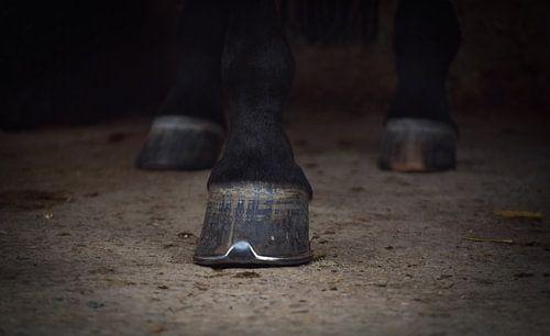 hoef van een paard van Rachel Beijkirch