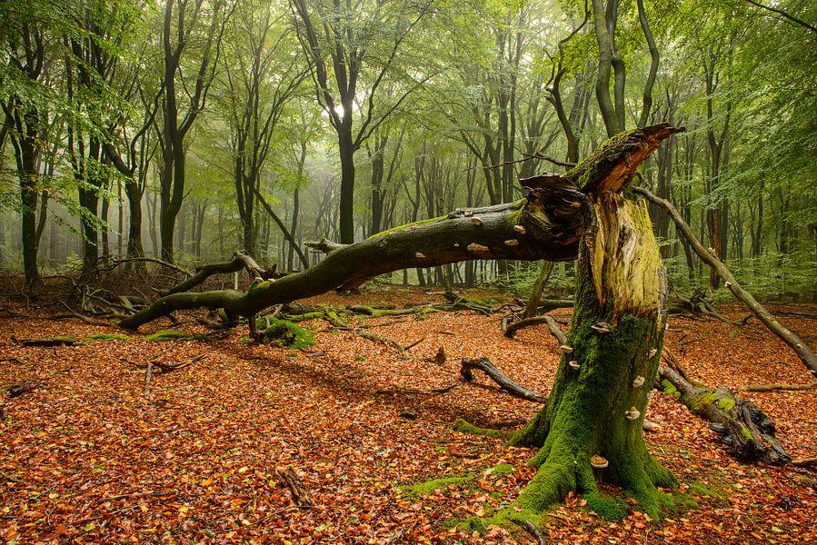 Dode boom van Sjoerd van der Wal