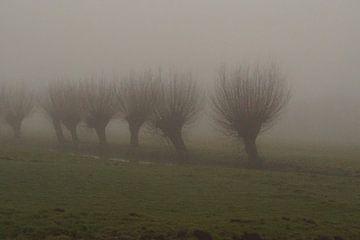 Kopfweiden im Nebel von wil spijker