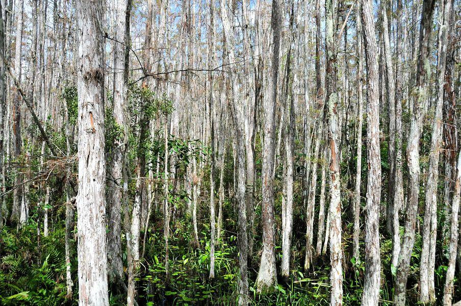 Dichte Bomen van Paul van Baardwijk