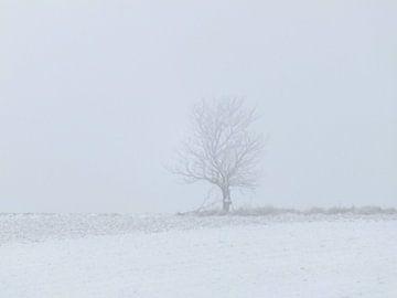 Baum   von Ilona Picha-Höberth