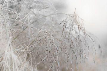 Siergrassen pracht bevroren van Sandra Koppenhöfer