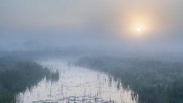 Mystiek landschap van Willemke de Bruin